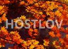 hostlov